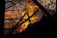 etna eruzione 2002 : pineta di linguaglossa in fiamme  - Etna (4662 clic)
