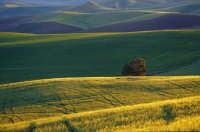 al tramonto  - Castellana sicula (5696 clic)