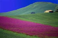 fioritura primaverile  - Resuttano (8123 clic)