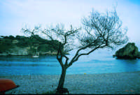 Albero spoglio   - Aci trezza (4734 clic)