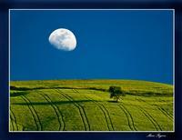 One moon, one tree  - Agira (3937 clic)