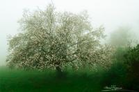 Seasonal conflict (350 clic)