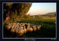 Il pastore porta il suo gregge nel recinto  - Agira (3715 clic)