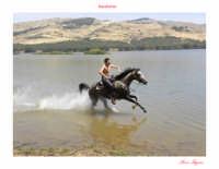 Cavallo in corsa sulle rive del lago Pozzillo.  - Lago di pozzillo (7673 clic)