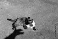Il gatto e l'ombra  - Agira (1502 clic)