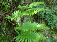 Cava Ispica - la flora  - Ispica (1732 clic)