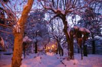 La neve in Villa Chalet  - Mistretta (10106 clic)