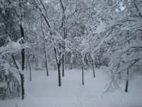 Narnia   - Mistretta (5191 clic)