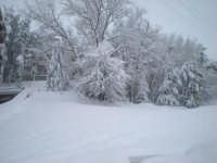 Più neve di così...!!!  - Mistretta (7726 clic)