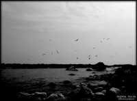 mare e gabbiani  - Riposto (3195 clic)