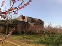 pescheto in allegagione-paesaggi rurali  - Caltagirone (2057 clic)