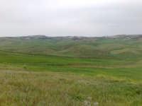 Campi di grano in fase di accestimento  - Canicattì (2874 clic)