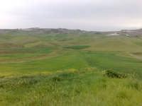 Campi di grano in fase di accestimento  - Canicattì (2552 clic)