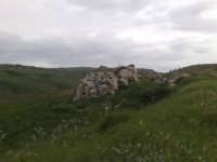 Campi di grano in fase di accestimento  - Canicattì (3204 clic)