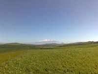Campo di grano in fase di levata, etna sullo sfondo  - Caltagirone (2426 clic)