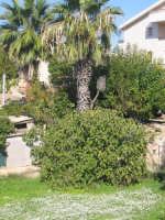 3 novembre 2007  - Cava d'aliga (2406 clic)