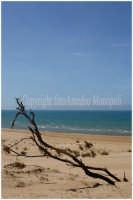 scorcio della spiagia  - Sampieri (1660 clic)