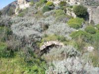 i ruderi del castello saraceno   - San carlo di chiusa sclafani (4874 clic)