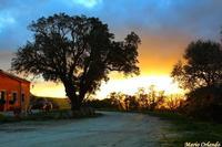 Un tiepido tramonto invernale. . .   - Ficuzza (3328 clic)