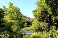 Gorgo Lungo immerso nell'incantevole flora del Bosco di Ficuzza... (4318 clic)