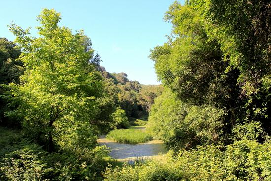 Gorgo Lungo immerso nell'incantevole flora del Bosco di Ficuzza... - FICUZZA - inserita il 04-Jun-12