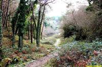 Gorgo Lungo all' interno del Bosco del Cappelliere... Il Gorgo Lungo, ancora regolarmente alimentato anche nel periodo estivo, mantiene inalterato l'habitat. Il paesaggio è suggestivo. Incassato in una conca, vi si può accedere da un canalone particolarmente umido ricco di muschi e licheni. Ricoperto da uno strato verde di lenticchie d'acqua, ospita la tartaruga palustre.  - Godrano (6443 clic)