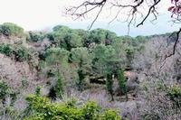 Gorgo Lungo immerso nell'incantevole flora del Bosco di Ficuzza... (4238 clic)