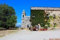 Abbazia di Santa Maria del Bosco . . .   - Contessa entellina (4186 clic)