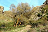 Ai piedi di Montagna Vecchia...  Accesso principale all' antica Corleone situata su Montagna Vecchia... Acqua della pietà . . .  - Corleone (4280 clic)