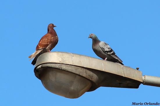 Più o meno come fa un piccione... - PALERMO - inserita il 05-Mar-13