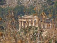 Tempio di Segesta  - Segesta (1979 clic)