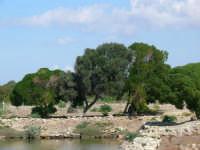 Il giro dell'isola  - Marsala (1015 clic)