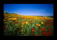 campo in fiore  - Pachino (4525 clic)