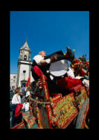 Festa di Sant'Alfio  - Trecastagni (3968 clic)
