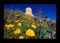 campo in fiore  - Licata (4961 clic)