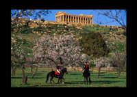 valle dei templi  - Agrigento (6489 clic)