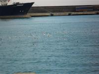 Gabbiani al porto di Catania (2866 clic)