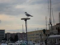 Gabbiano al porto di Catania (2824 clic)