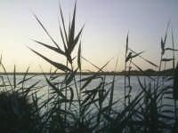 vista del fiume   - Simeto (3074 clic)