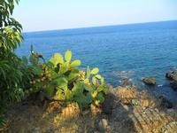 Mare di Aci Castello (2908 clic)