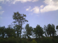 vista di alcuni alberi su una collina  - Ragalna (3151 clic)