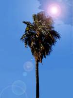 Una palma prende il sole...  - Lentini (3879 clic)