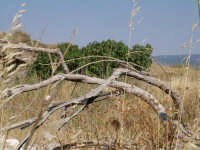 s. margherita e dintorni ... in una giornata di arido giugno   - Santa margherita di belice (2557 clic)