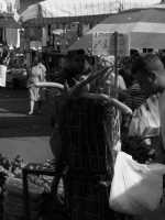 gente di palermo PALERMO Saverio Turano