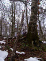 il bosco  - San fratello (7017 clic)