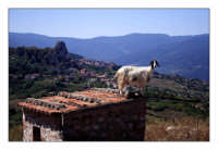 Capra sentinella  - San fratello (6195 clic)