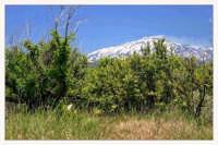 Veduta dell'Etna PALAGONIA Antonino La Macchia