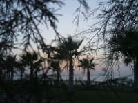 Foto fatta al lungomare di Venetico visto da dietro un albero.  - Venetico marina (9970 clic)
