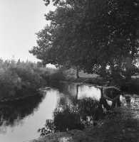 una escursione lungo il fiume  - Anapo (3365 clic)