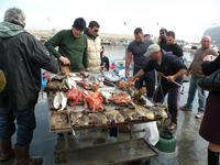 l'approdo dei pescatori   - Isola delle femmine (4078 clic)